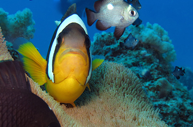 The Art of Diving with Beachcomber