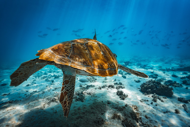 Take a dive into the heart of the Indian Ocean with Beachcomber Resorts & Hotels