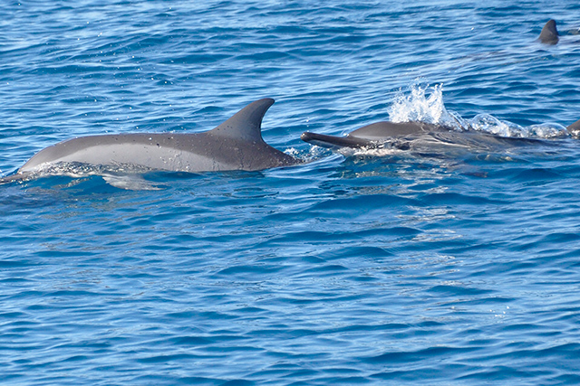 Casela Cruise: Swim with Dolphins in Tamarin